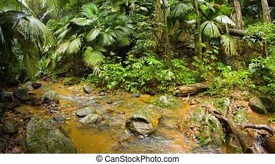 """""""Abstract, Fisheye Shot of a Tropical Wilderness Stream, with Sound"""""""