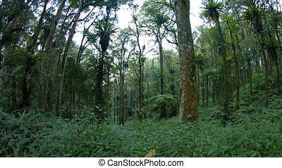"""Abstract Fisheye View of Trees in a Tropical Forest..."