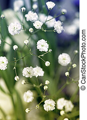 Abstract floral background. Closeup macro