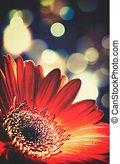 Abstract floral backgrounds with beaty bokeh