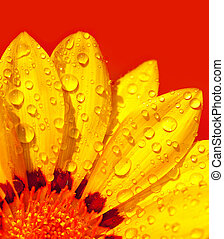 Abstract flower petals - Abstract beautiful flower, colorful...