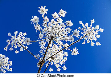 abstract flowers - plant covered with snow against the blue ...