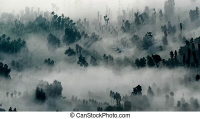 abstract fog forest background