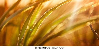 Abstract Grass Background - Sun shines through grass in...