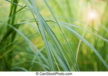 Abstract grass background whith leans flare