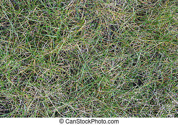 Abstract Grass Pattern #2