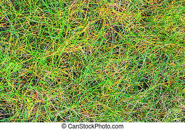 Abstract Grass Pattern #3
