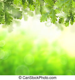 Abstract green background with green oak leaves and bokeh light