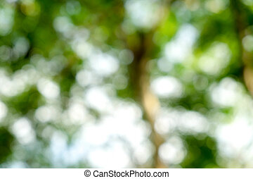 abstract green bokeh Nature background