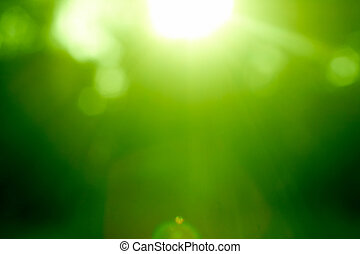 Abstract green forest defocused with sunbeam
