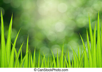 Abstract green grass leaves with bokeh background.