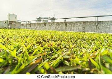abstract green grass view with sun light filter
