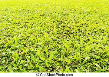 abstract green grass with sunlight filter