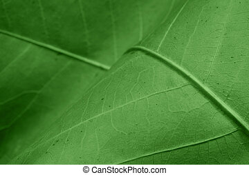 Abstract green leaf background