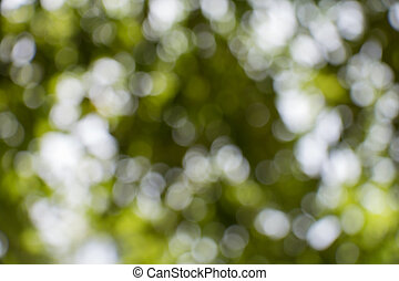 Abstract green nature bokeh background