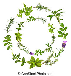 Abstract Herb Leaf Design - Medicinal and culinary herbs in...