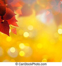 abstract, herfstachtig, achtergronden, met, berk, gebladerte