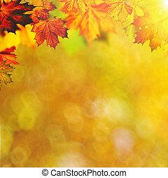 abstract, herfstachtig, achtergronden, met, esdoorn, gebladerte