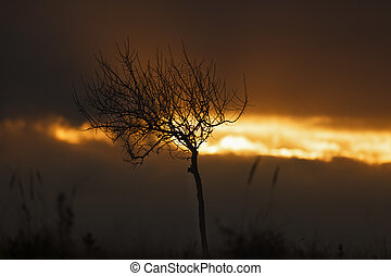 abstract image with the silhouette of a tree at sunset