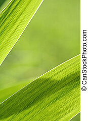 Abstract iris leaf background
