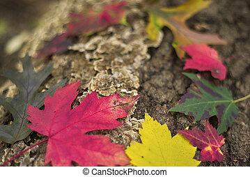 abstract, kleurrijke, herfst, achtergrond, met, fallen loof, in, groene, rood, en, sinaasappel