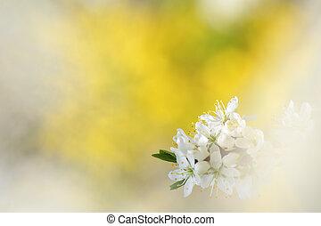 abstract, lente, achtergrond, met, appelboom, bloesems