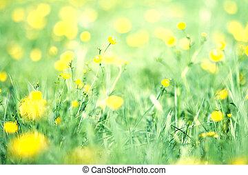 abstract, lente, en, zomer, achtergrond., lente, gras, in, zon ontsteken