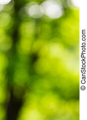 Abstract light of the tree - Abstract light through the...