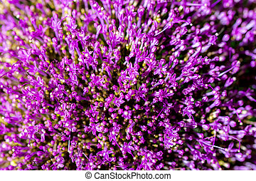 Abstract lilac flowers bouquet, top view, selective focus. Beautiful natural floral background, always fashionable modern color. For background , backdrop, substrate, composition use.