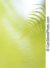 Abstract lush forest green fern background