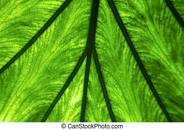 abstract macro close up of a green