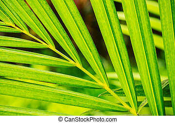 Abstract Macro of Tropical Leaf