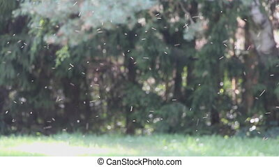 Abstract movement and flight of many insects on a green forest background
