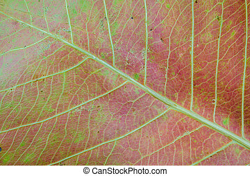 Abstract natural background of dry red leaf texture