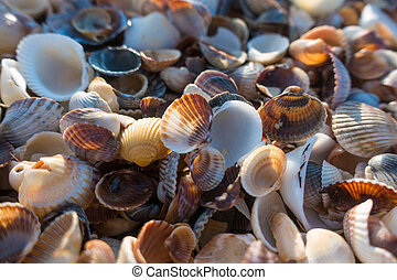 natural background with seashell at the beach