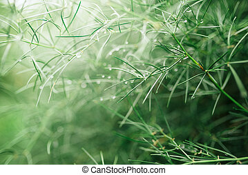 Abstract natural background with shallow depth of field