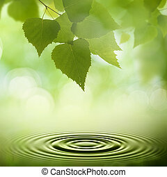 Abstract natural backgrounds. Green leaves with morning dew