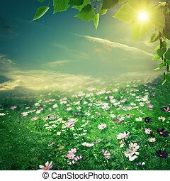 Abstract natural backgrounds. Summer meadow with beauty flowers