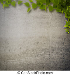 Abstract natural backgrounds with birch foliage against concrete wall