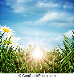 Abstract natural backgrounds with daisy flowers