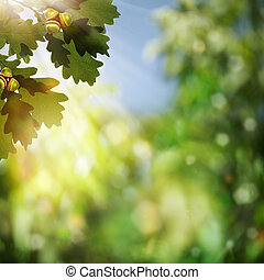 Abstract natural backgrounds with oak foliage and beauty bokeh