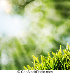 Abstract natural backgrounds with sun beam and green grass