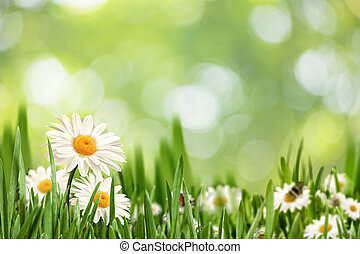 Abstract natural landscape with beauty daisy flowers and bokeh