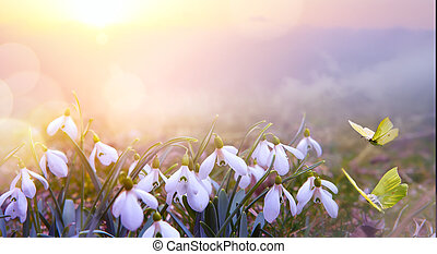 abstract nature spring Background; Snowdrop spring flower and fly butterfly