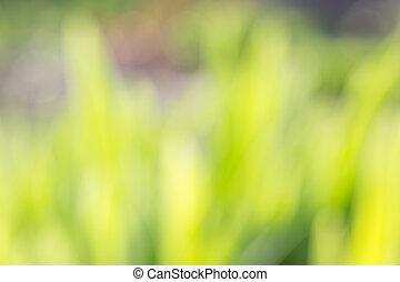 abstract, natuurlijke , achtergronden, met, beauty, bokeh