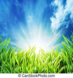 abstract, natuurlijke , achtergronden, met, groen gras, unfer, de, blauwe hemelen