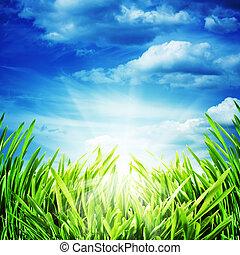 abstract, natuurlijke , achtergronden, met, heldere zon, en, groene weide