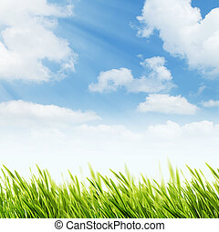 abstract, natuurlijke , achtergronden, met, zomer, gebladerte, en, helder, sunl