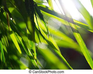 abstract, nevelig, natuurlijke , achtergronden, met, bamboe, gebladerte