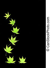 Abstract of Acer Leaves